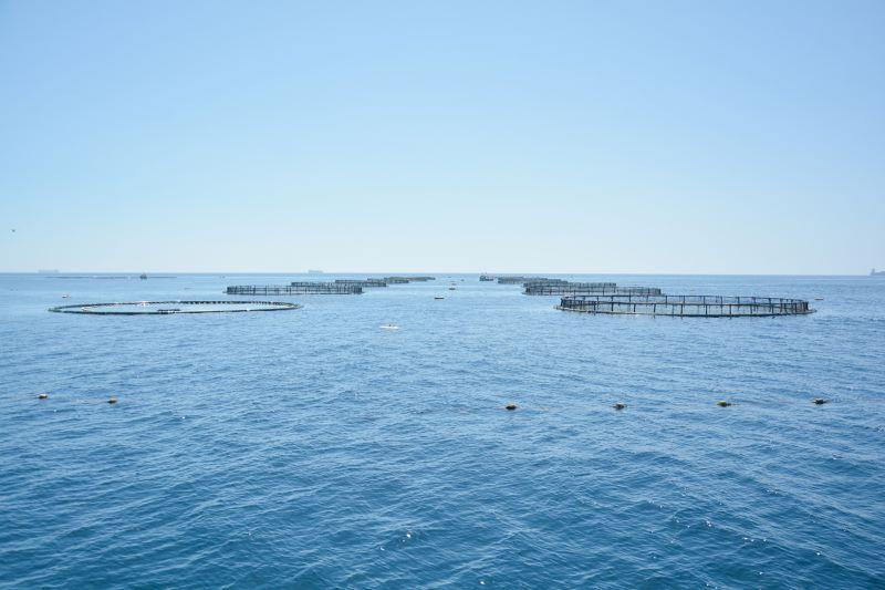 fish farm mff.com.mt