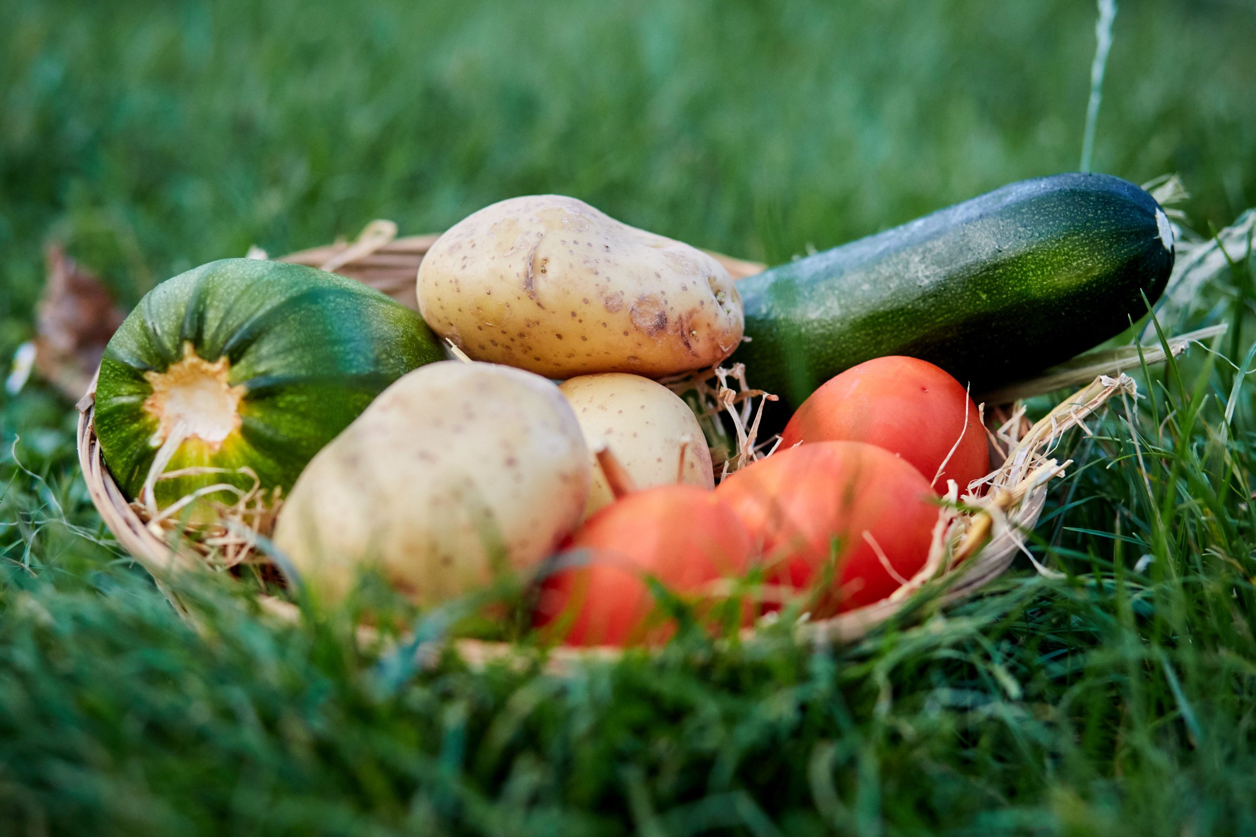 Malta's troubled agricultural sector: 2020 sees costs go up and revenue come down for operators