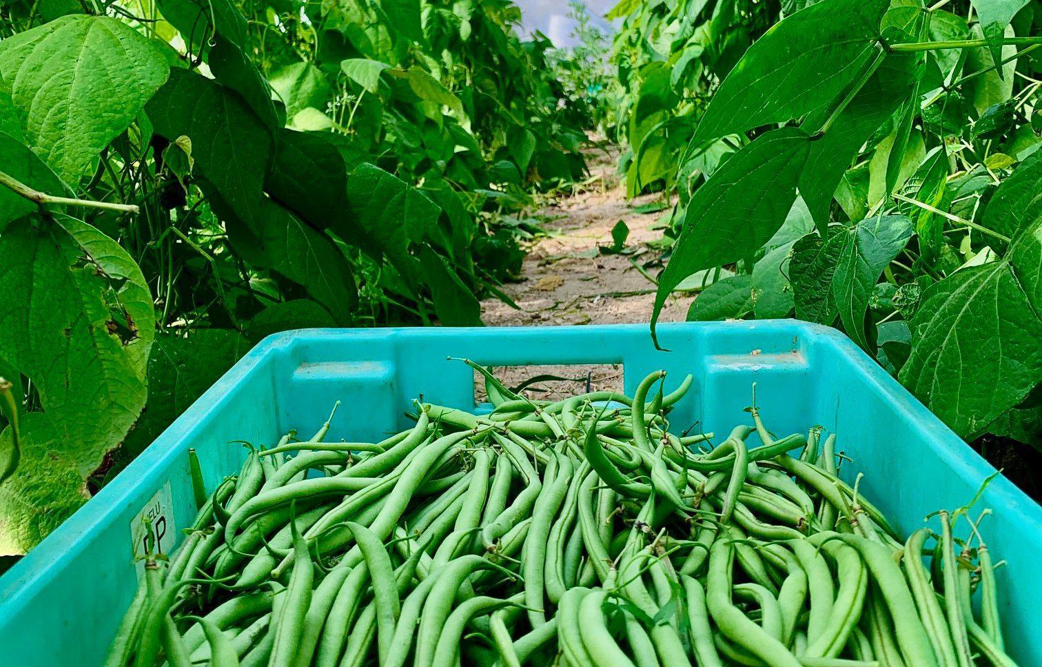 agriculture ta bona farm